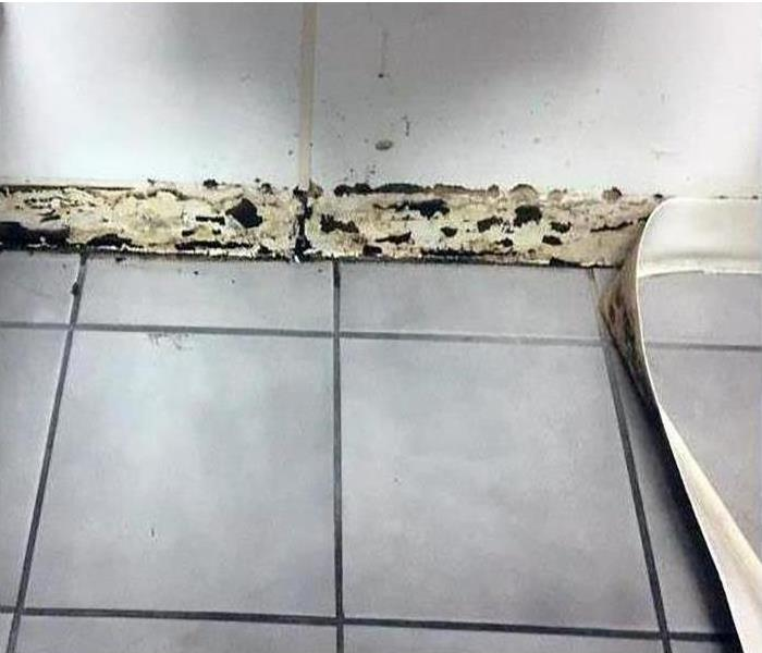 Mold along baseboards