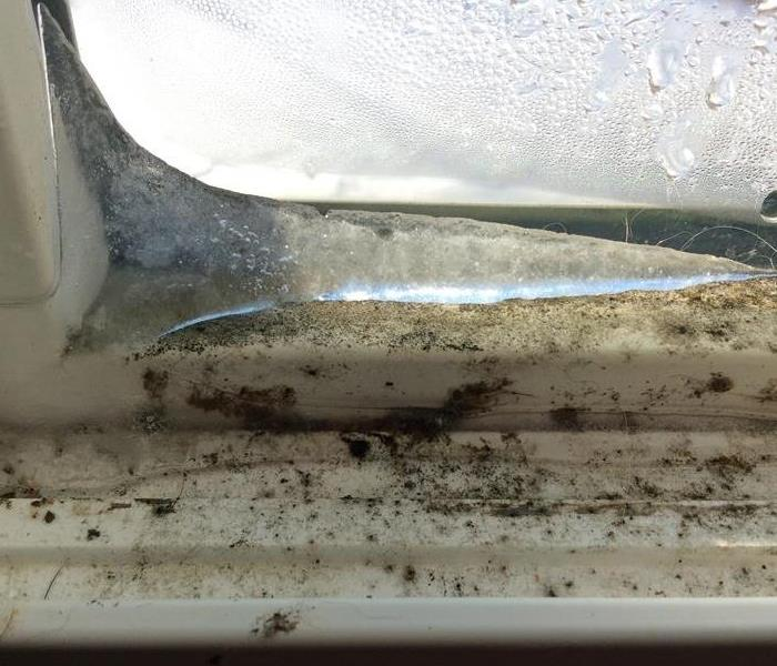 Mold around window