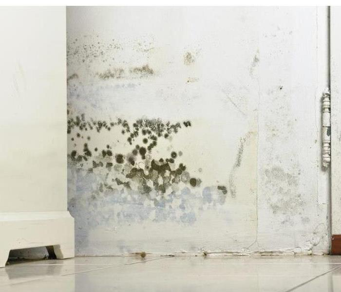 Wall covered with mold growth