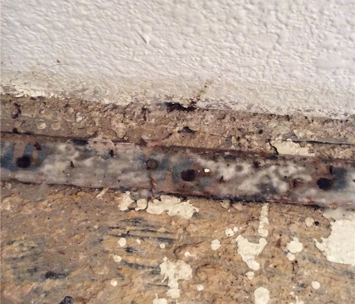 Mold Remediation Ordinary Mold